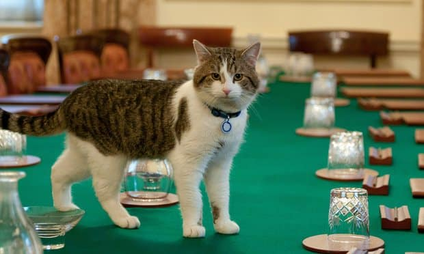 LARRY THE CAT beats Theresa May into Buckingham Palace to become PRIME MINISTER
