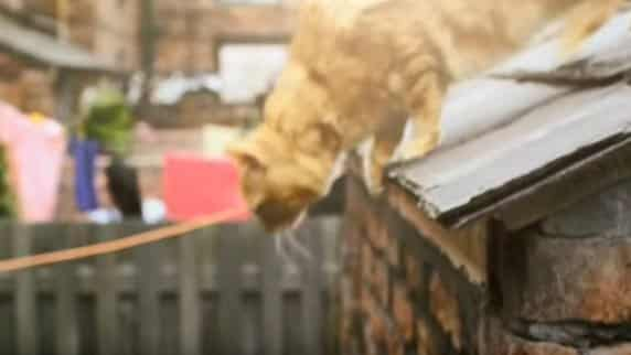 Coronation Street filming SUSPENDED as cat won't come down from roof